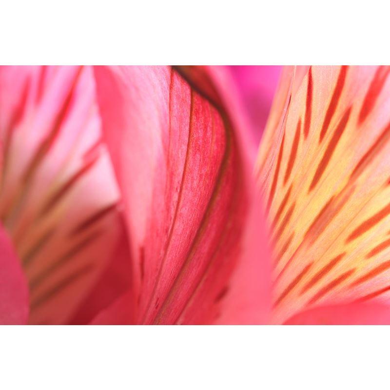 Flowers 33 Original Image 1219