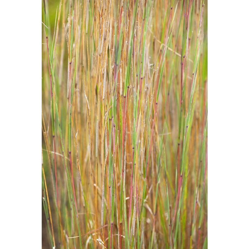 Grasses 1 Grasses 1 Original Image 0143
