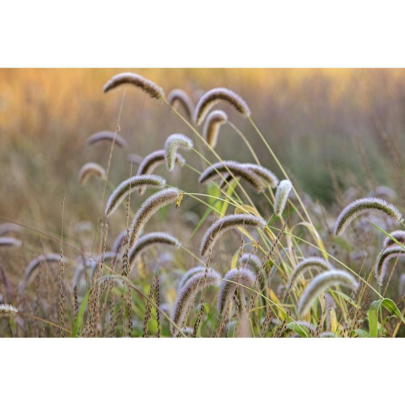 Grasses 14 Grasses 14 Original Image 9377