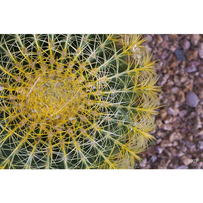 Grasses-Leaves 3 Grasses-Leaves 3 Original Image 3